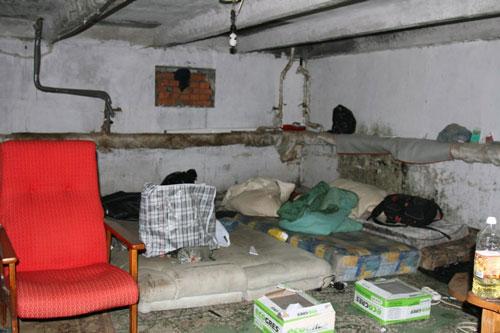 Блохи в подвале откуда и как избавиться